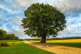 树,公园,自然